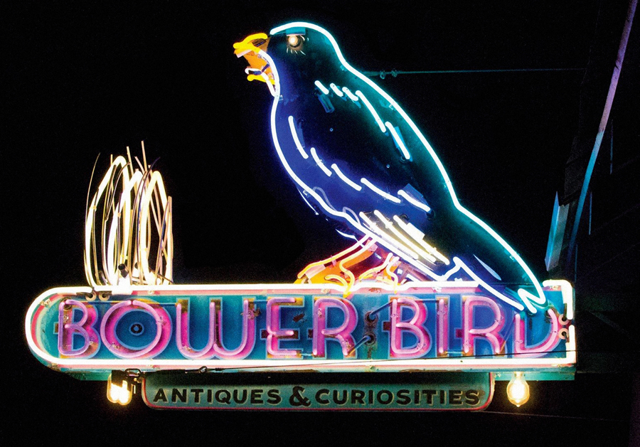 Bower Bird Sign Studios