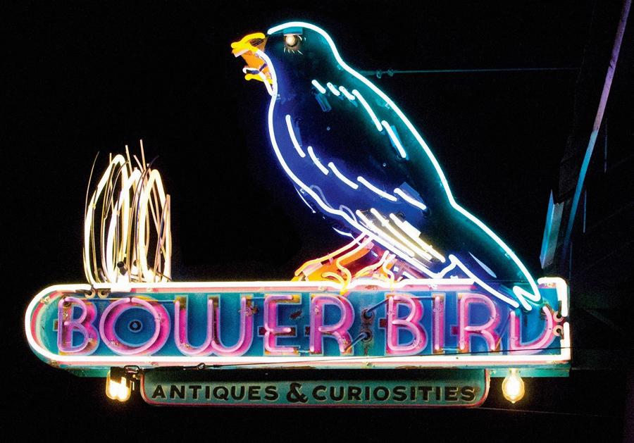 Bower Bird web
