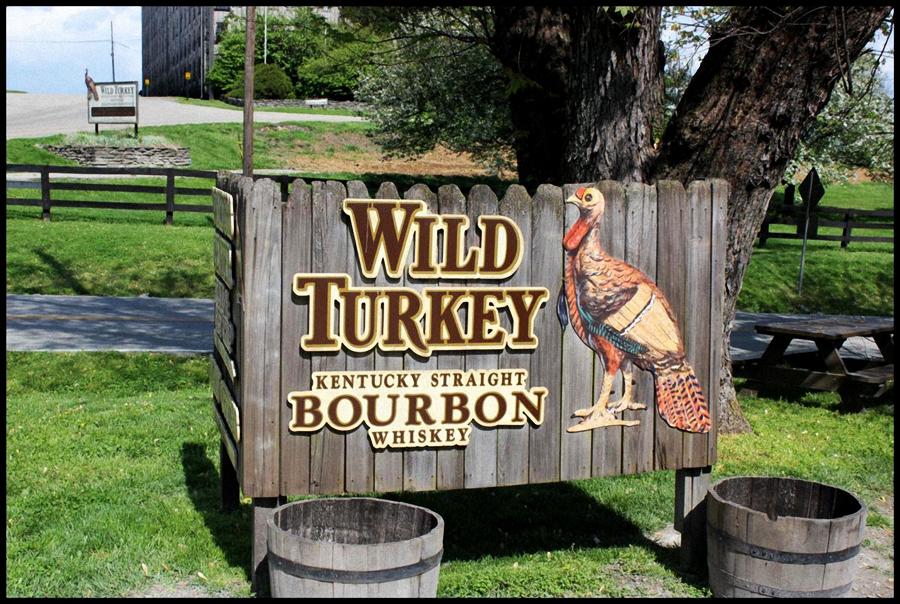 Wild Turkey 4 edited