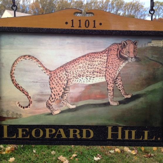 Leopard Hill closeup